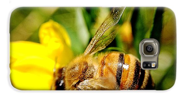 Honey Bee Galaxy S6 Case