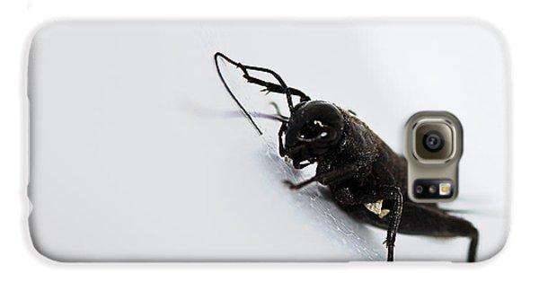Cricket Galaxy S6 Case - Jiminey Cricket by Susan Capuano