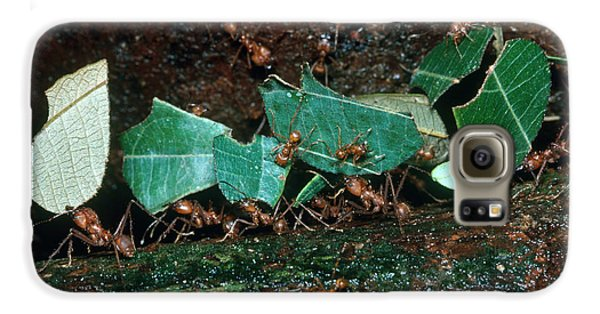 Leafcutter Ants Galaxy S6 Case by Gregory G. Dimijian