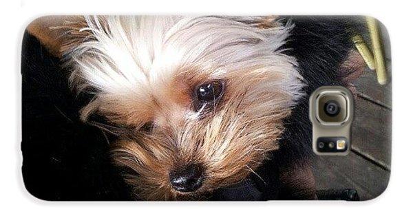 My #princess #dog #yorkie Galaxy S6 Case