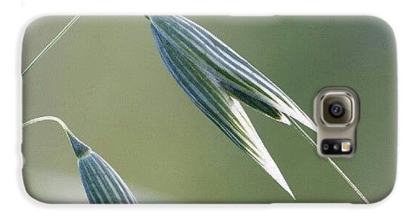 #oat #spica #decorative #cereal #plant Galaxy S6 Case