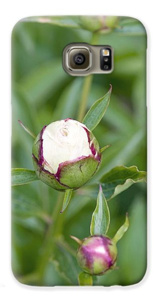 Paeonia Lactiflora 'shirley Temple' Galaxy S6 Case by Jon Stokes