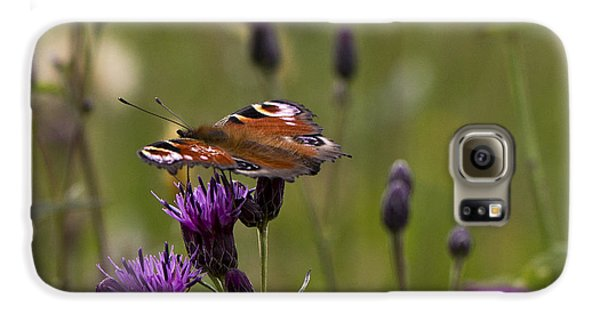 Peacock Butterfly On Knapweed Galaxy S6 Case