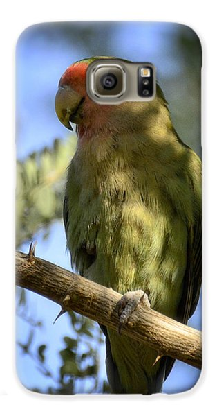 Pretty Bird Galaxy S6 Case by Saija  Lehtonen