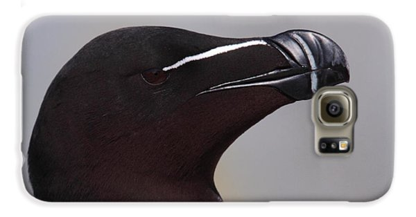 Razorbill Portrait Galaxy S6 Case by Bruce J Robinson