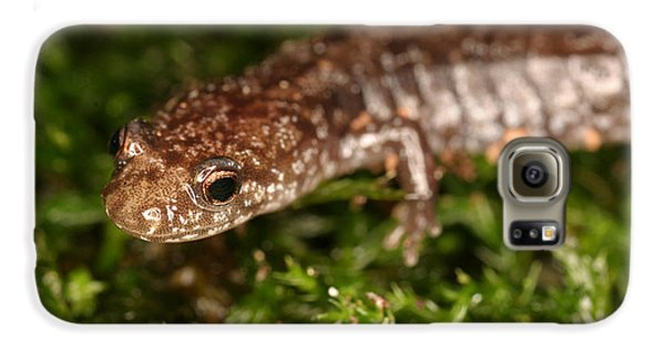 Red-backed Salamander Galaxy S6 Case by Ted Kinsman