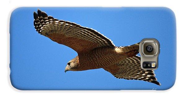 Red Shouldered Hawk In Flight Galaxy S6 Case