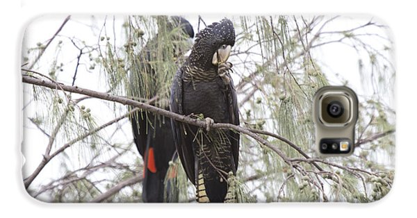 Red Tailed Black Cockatoos Galaxy S6 Case by Douglas Barnard