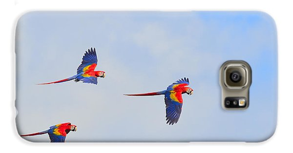 Scarlet Macaws Galaxy S6 Case by Tony Beck