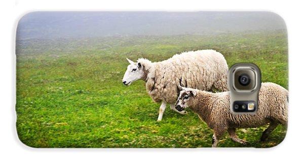 Sheep In Misty Meadow Galaxy S6 Case by Elena Elisseeva