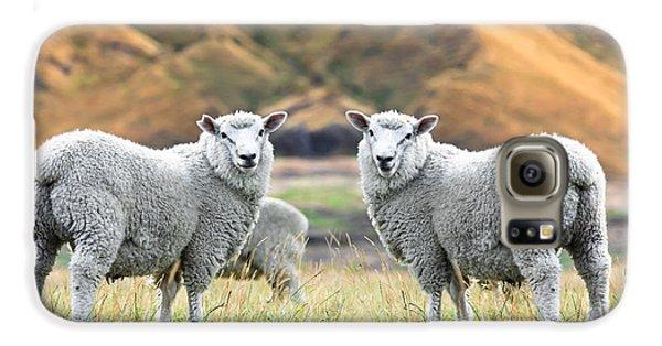 Sheep Galaxy S6 Case - Sheeps by MotHaiBaPhoto Prints