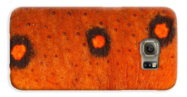 Skin Of Eastern Newt Galaxy S6 Case by Ted Kinsman