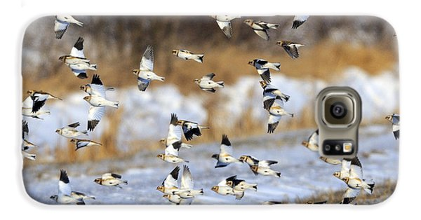 Snow Buntings Galaxy S6 Case by Tony Beck
