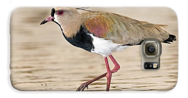 Southern Lapwing Galaxy S6 Case by Tony Camacho