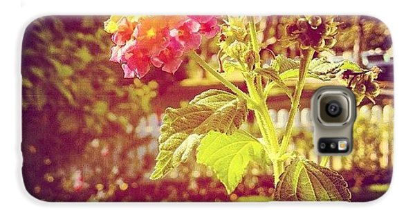 Beautiful Galaxy S6 Case - #sunlight #beautiful #flower by Cortney Herron