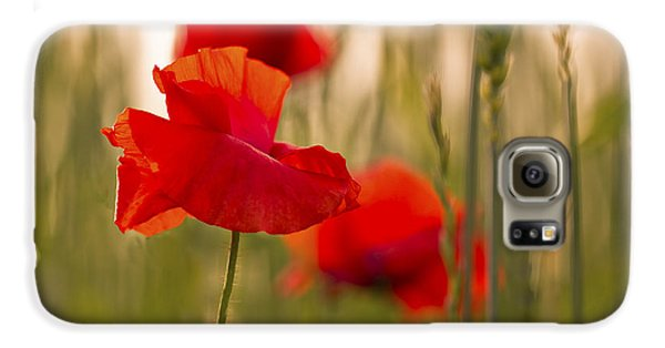 Galaxy S6 Case featuring the photograph Sunset Poppies. by Clare Bambers