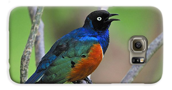 Superb Starling Galaxy S6 Case by Tony Beck
