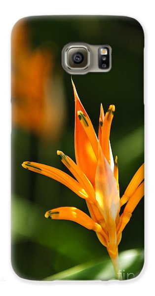 Tropical Orange Heliconia Flower Galaxy S6 Case by Elena Elisseeva