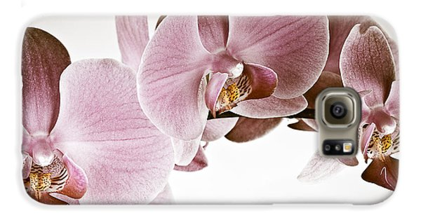 Vintage Orchid Galaxy S6 Case by  Onyonet  Photo Studios