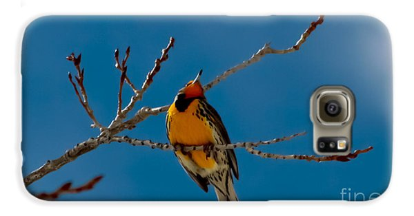 Meadowlark Galaxy S6 Case - Western Meadowlark by Mitch Shindelbower
