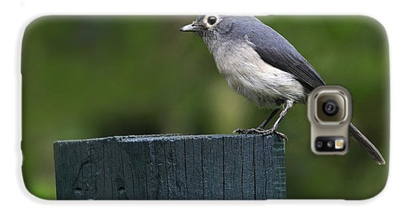 White-eyed Slaty Flycatcher Galaxy S6 Case