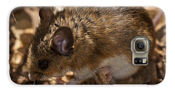 White-footed Mouse Galaxy S6 Case by  Onyonet Photo Studios