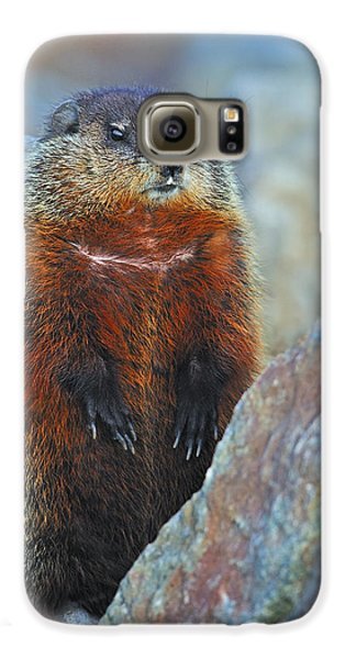 Woodchuck Galaxy S6 Case by Tony Beck