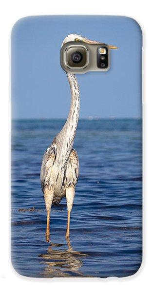 Wurdemann's Heron Galaxy S6 Case