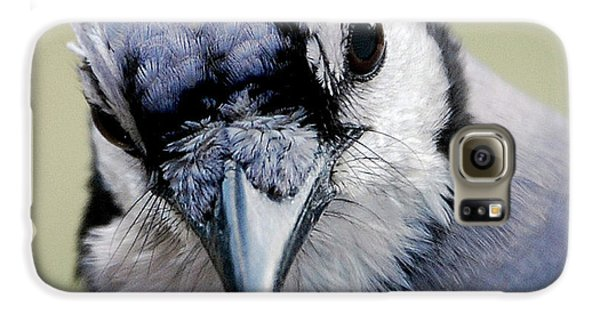 Bluejay Galaxy S6 Case -  Blue Jay by Skip Willits