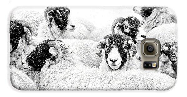Sheep Galaxy S6 Case -  In Winters Grip by Janet Burdon