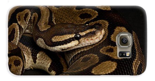 A Ball Python Python Regius Galaxy S6 Case