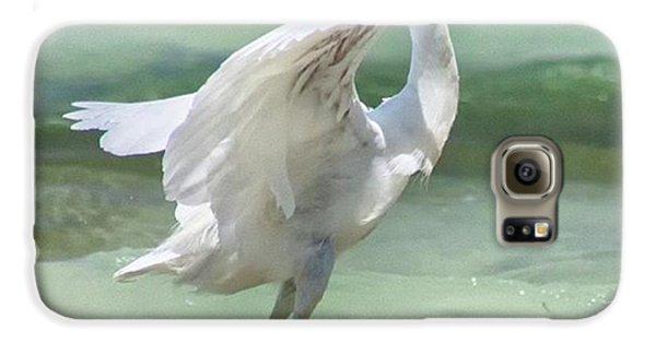 A Snowy Egret (egretta Thula) At Mahoe Galaxy S6 Case