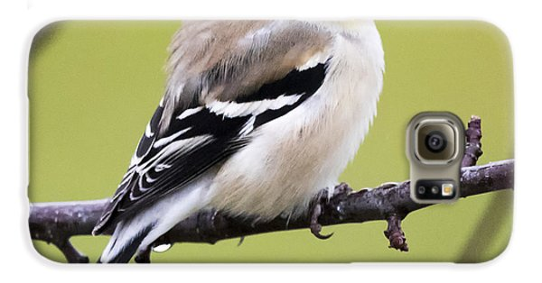 American Goldfinch Galaxy S6 Case