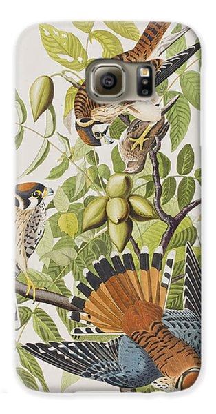 American Sparrow Hawk Galaxy S6 Case by John James Audubon