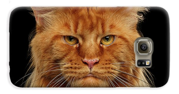 Cat Galaxy S6 Case - Angry Ginger Maine Coon Cat Gazing On Black Background by Sergey Taran