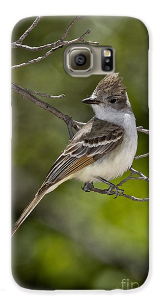 Ash-throated Flycatcher Galaxy S6 Case