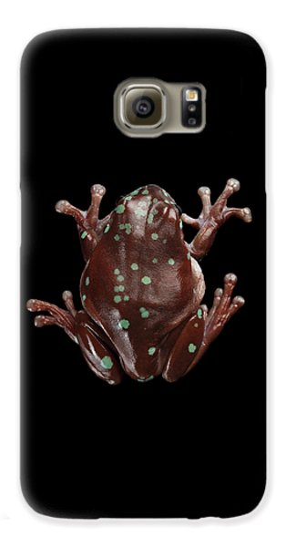 Australian Green Tree Frog, Or Litoria Caerulea Isolated Black Background Galaxy S6 Case by Sergey Taran