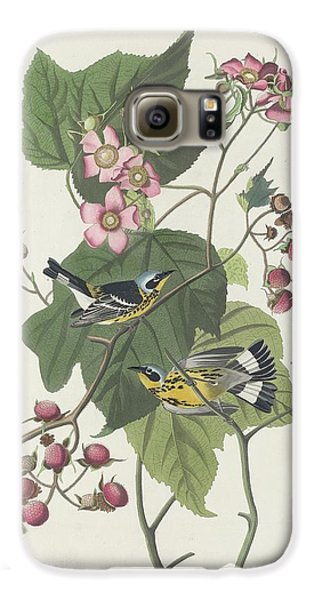 Black And Yellow Warbler Galaxy S6 Case by Rob Dreyer