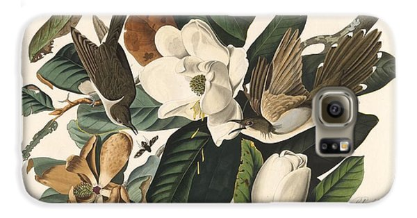 Cuckoo Galaxy S6 Case - Black-billed Cuckoo by Dreyer Wildlife Print Collections