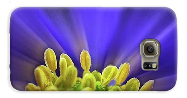 Beautiful Galaxy S6 Case - blue Shades - An Anemone Blanda by John Edwards