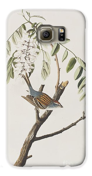Chipping Sparrow Galaxy S6 Case by John James Audubon