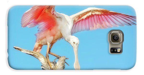 Spoonbill Cleared For Takeoff Galaxy S6 Case