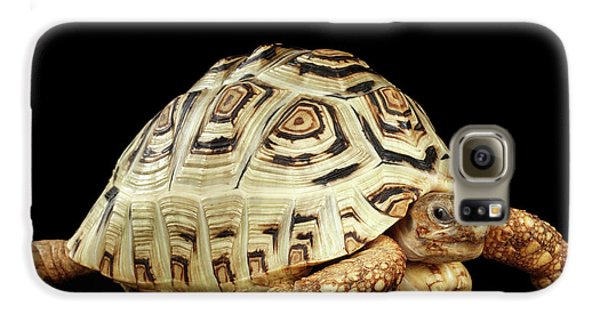 Closeup Leopard Tortoise Albino,stigmochelys Pardalis Turtle With White Shell On Isolated Black Back Galaxy S6 Case by Sergey Taran