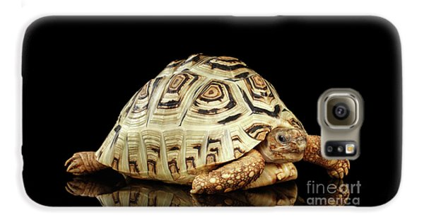 Closeup Leopard Tortoise Albino,stigmochelys Pardalis Turtle With White Shell On Isolated Black Back Galaxy S6 Case