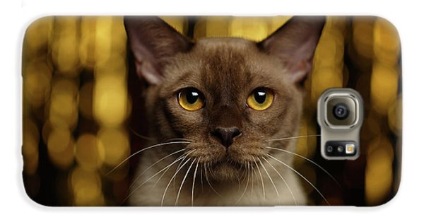 Cat Galaxy S6 Case - Closeup Portrait Burmese Cat On Happy New Year Background by Sergey Taran