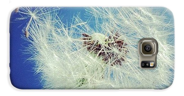 Blue Galaxy S6 Case - Dandelion And Blue Sky by Matthias Hauser
