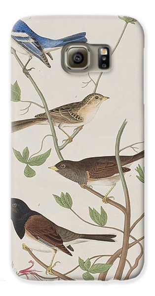 Finches Galaxy S6 Case by John James Audubon