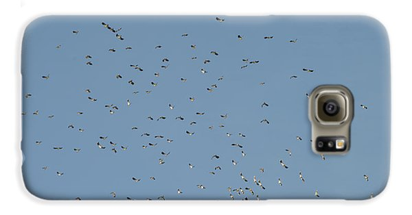 Flock Of Beautiful Migratory Lapwing Birds In Clear Winter Sky Galaxy S6 Case