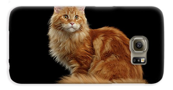 Cat Galaxy S6 Case - Ginger Maine Coon Cat Isolated On Black Background by Sergey Taran