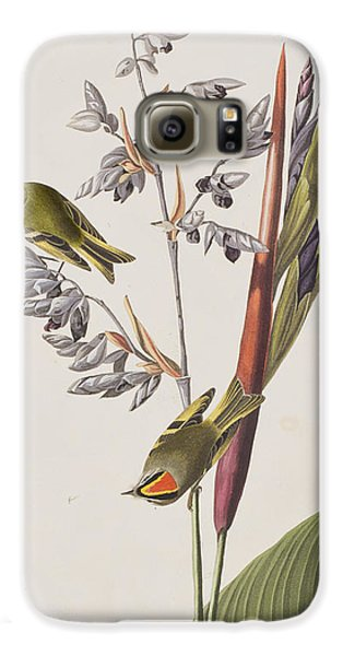 Golden-crested Wren Galaxy S6 Case by John James Audubon